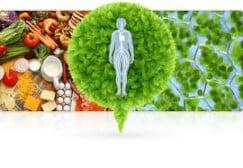 เปรียบเทียบการรับประทานอาหารเสริม gh3 กับการฉีดโกรทฮอร์โมนด้วยสารเคมีสกัด